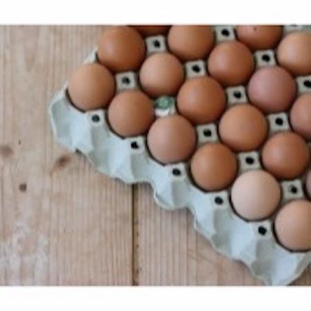 Økologiske Egg fra Fat og Fe
