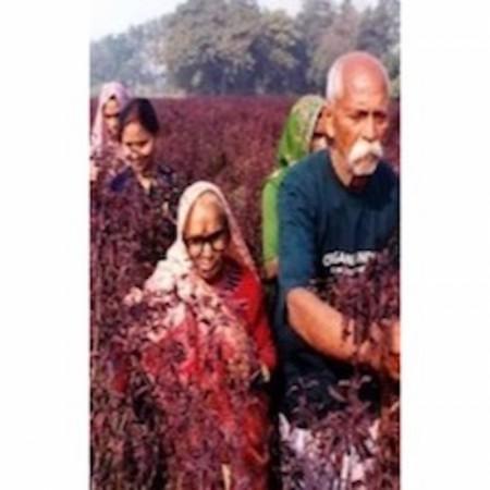 Organic India - Tulsi Te